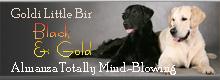 Сайт голден ретривера Goldi Little Bir и прямошерстного ретривера Almanza Totally Mind-Blowing